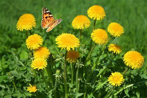 top ten der wirksamsten pflanzenschutzmassnahmen