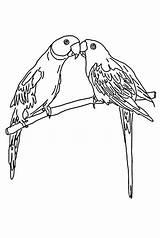 Parrot Coloring Mating Pages Print Colornimbus Sheets Parrots Cute Colour sketch template