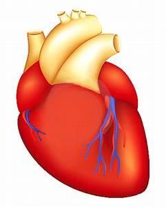 Артериальная гипертензия лечение конкором