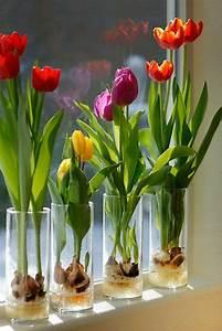 Blumenzwiebeln Im Glas : 17 best ideas about plante d 39 int rieur on pinterest plantes plantes d 39 int rieur et rang de perles ~ Markanthonyermac.com Haus und Dekorationen