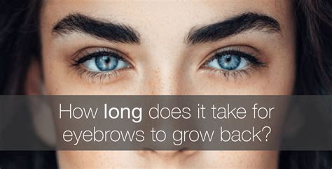 How Long Does It Take For Eyebrows To Grow Back?  Amalie Blog