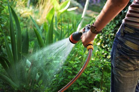 planting a garden how to conserve water at home
