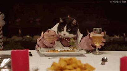 Eating Dinner Dining Animated Cat Animals Dog