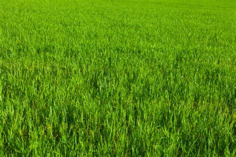 Green Well-kept Lawn