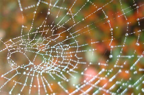 file perles de ros 233 e sur une toile d araign 233 e 02 jpg