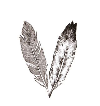 plume daigle tatouage recherche google dessin plume