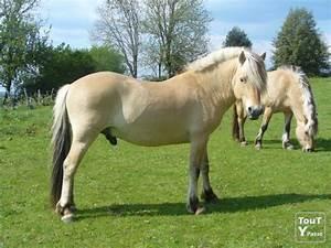 2 Chevaux Occasion : vends 2 chevaux fjord aveyron ~ Medecine-chirurgie-esthetiques.com Avis de Voitures