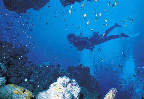 scuba diving  south africa