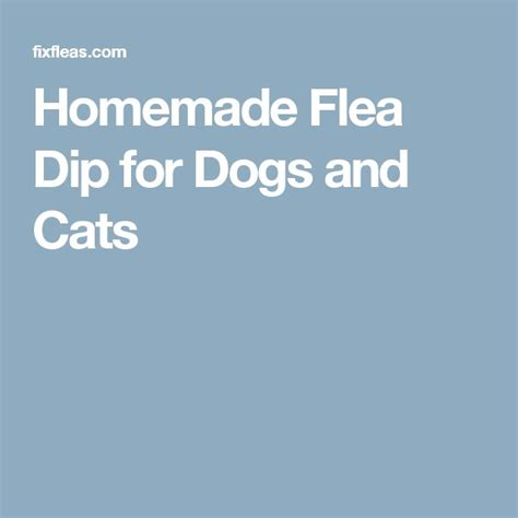 homemade flea dip  dogs  cats cute animals
