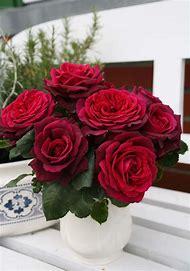 Burgundy Rose