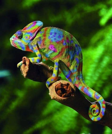 chameleons changing colors 301 moved permanently