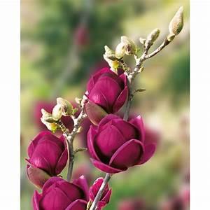 Ahrens Und Sieberz Versand : magnolie 39 genie 39 online kaufen bei ahrens sieberz ~ Lizthompson.info Haus und Dekorationen