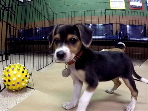 adoptions  offered   shelters