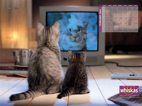 computer cats domestic animals photo  fanpop