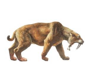saber toothed cat saber toothed cats used their 8 inch canines to help