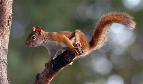 do you have the attention span of a squirrel the globe