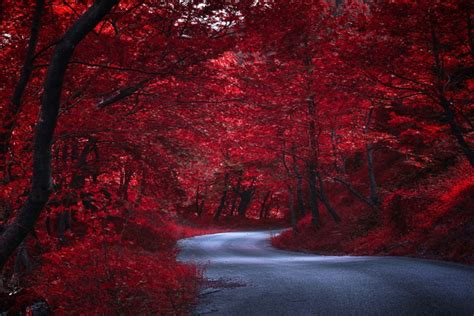 camino  traves de arboles rojos en otono japon