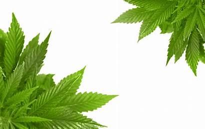 Cannabis Transparent Purepng Nature