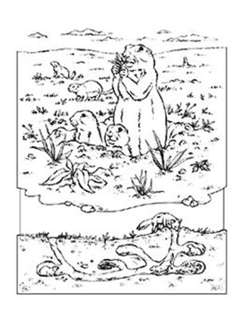 coloring book animals    animals cartoon