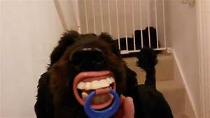Human teeth on a dog!! - YouTube