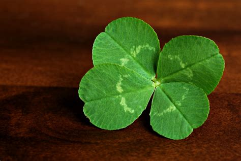 four leaf clover four leaf clover must be this to ride
