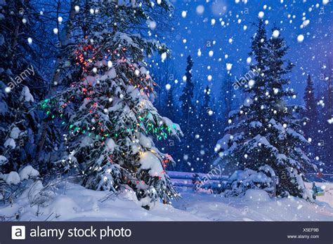 decorated christmas tree forest night stock
