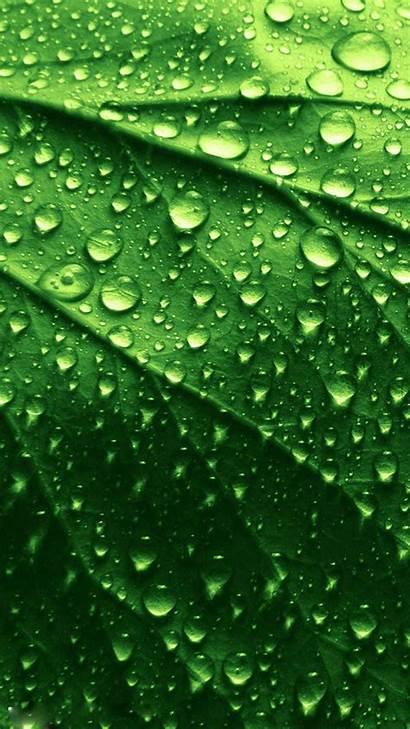 Iphone Wallpapers Leaf Water Ios Artwork Desktop