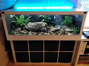 Aquarium Unterschrank Ikea : one guy turned an ikea kallax shelving into a snake terrarium shouts ~ Watch28wear.com Haus und Dekorationen