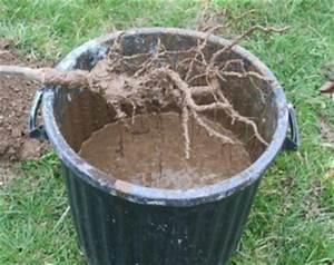 Profondeur Des Racines D Un Figuier : racines hortensias tout ~ Nature-et-papiers.com Idées de Décoration