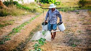 organic agriculture benefits future opportunities and