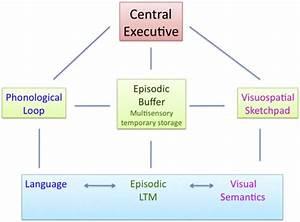 Schematic Diagram Of Baddeley U0026 39 S Model Of Working Memory