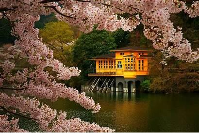 Blossom Cherry Japan Spring Trees Landscape Nature