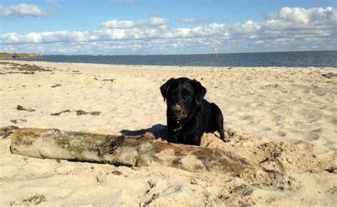 urlaub  holland wo darf der hund zum strandlaeufer