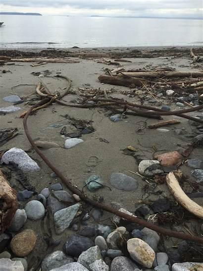 Debris Marine