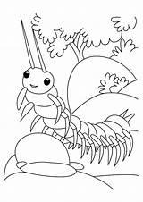 Coloring Centipede Gambar Mewarnai Serangga Coloring4free Insect Anak Insekt Paud Ausmalbilder Untuk Tk Designlooter Berbagai Macam sketch template