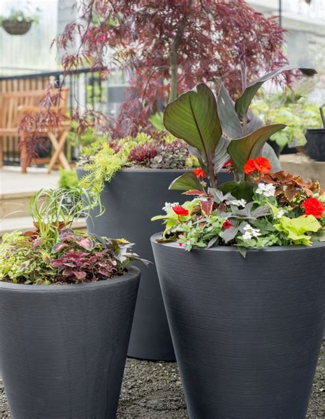 Ideas For Container Gardening  Plant Booster