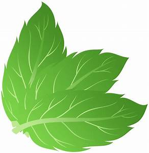 Pepermint PNG images free download, mint PNG