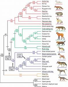 Why we should recognize two species of raccoon dog ...