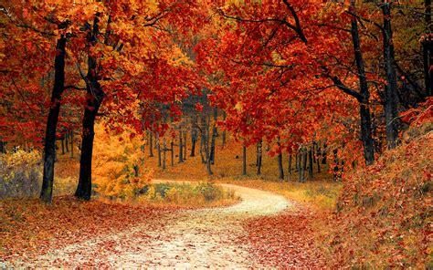 Autumn Season Hd Wallpapers autumn fall season wallpapers hd wallpapers id 17326