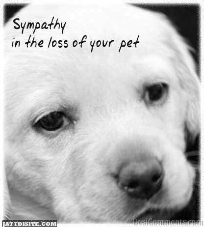 words of comfort for loss of pet sympathy in the loss of your pet graphic jattdisite