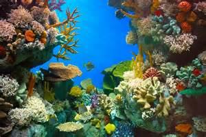 Under The Sea Decoration by Aquarium De R 234 Ve Pour Ses Poissons Pratique Fr