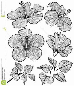 Draw The Longitudinal Section Of Hisbiscus Flower Draw And ...