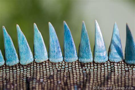 spines burrard lucas photography