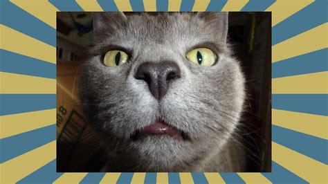 lustige katzen bilder lustigsten katzen beste 2016