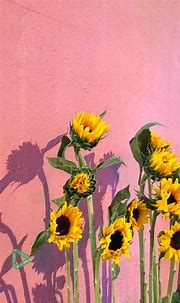 Wallpaper | Sunflower wallpaper, Flower wallpaper, Iphone ...