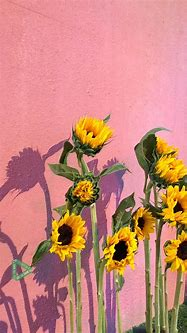 Wallpaper   Sunflower wallpaper, Flower wallpaper, Iphone ...