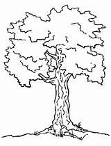 Coloring Tree Pages Print Preschool Winter Printable Pine Oak Simple Template Elm Fallen Getcolorings Trees Leaves Drawing sketch template