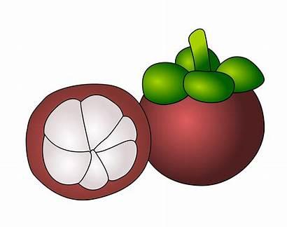 Clipart Manggis Gambar Clip Fruits Mangosteen Garcinia