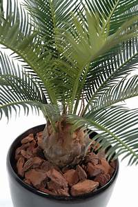Palmier Artificiel Gifi : palmier artificiel cycas baby int rieur ext rieur cm vert ~ Teatrodelosmanantiales.com Idées de Décoration