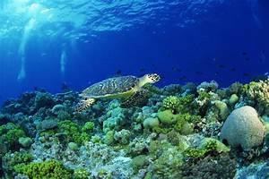 What Are the Five Biotic Factors of an Aquatic Ecosystem ...  Aquatic